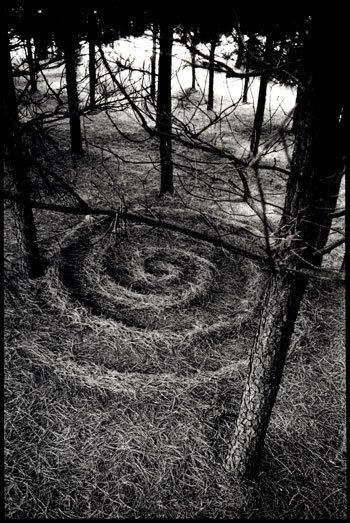 Pine Forest Spiral by Stu Jenks